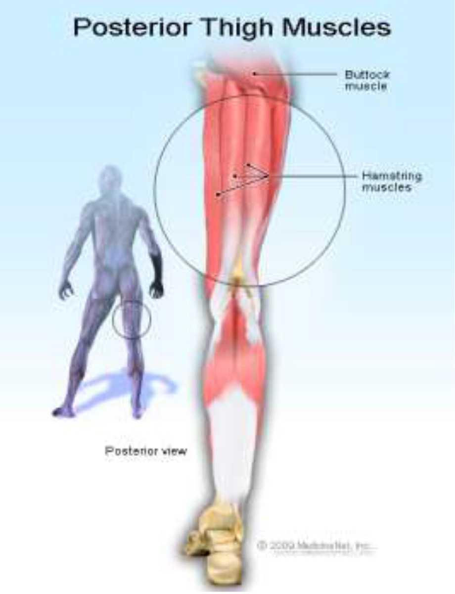 Thigh Pain Back Hamstring Muscle Strain Jacoline Scott