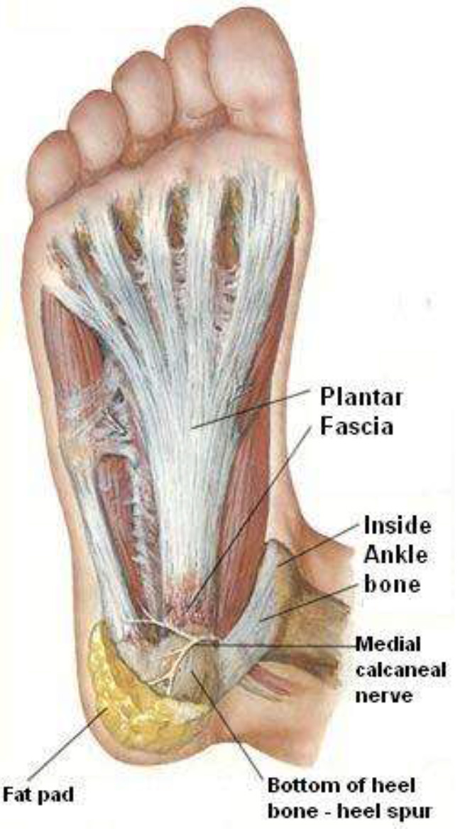 Foot Pain (Plantar Fasciitis) | Jacoline Scott Physiotherapists